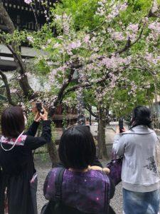 4/3 京都で春を探す会
